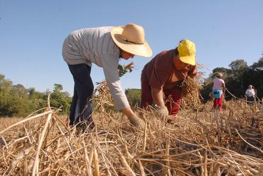 Recursos do Seguro Rural devem triplicar em 2015 no Paraná.Foto: Arquivo ANPr