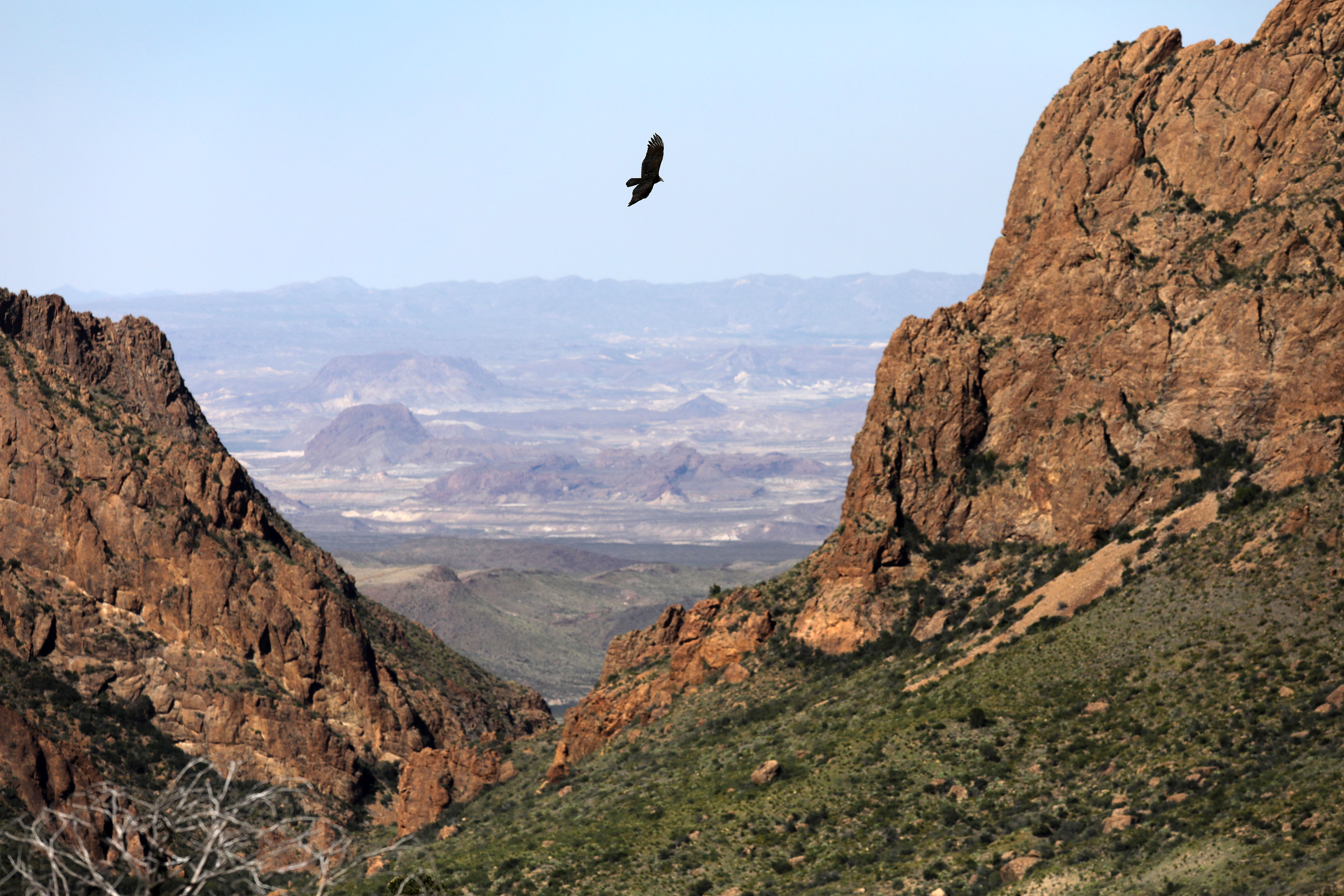 BIG BEND NATIONAL PARK, TX - OCTOBER 16:  A falcon flies over the Chisos Basin on October 16, 2016 in the Big Bend National Park in West Texas. Big Bend is a rugged, vast and remote region along the U.S.-Mexico border and includes the Big Bend National Park.  (Photo by John Moore/Getty Images)